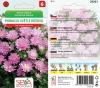 20301/5405 Astra Průhonický trpaslík Růžový 0,3g