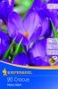 505506/7104Krokusy fialové 20ks