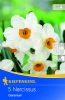 505711 / 7703Narcisy bílé/oranžová koruna 5ks