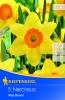 505728 / 7704Narcisy žluté/oranžová koruna 5ks