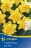 503502 /8101 Narcisy plnokvěté žluté 5ks