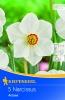 505803 / 8103 Narcisy bílé/oranžová koruna 5ks