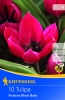 503397 / 9101Tulipány Botanické purpurovo-fialové, černý střed 10ks
