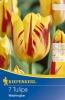 503236 / 8505 Tulipány Triumf  žluté, červeně žíhané 7ks