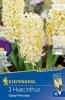 500396/7302 Hyacinty bledě žluté 3ks