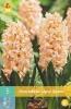 850318/7402 Hyacint růžový - Gipsy Queen 5ks