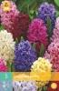 850248/7404 Hyacint směs barev 5ks