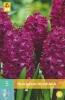 850321/7501 Hyacint tmavě růžový - Woodstock 5ks
