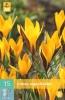 850371/7505 Krokus žlutý - Angustifolius 10ks