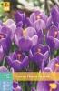850231/7603 Krokus fialový velkokvětý 15ks