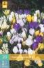 850380/7702 Krokus směs botanických 20ks
