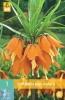 850250/8402 Řebčík oranžový 1ks