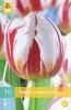 850239/8602 Tulipán červenobílý TRIUMF - Carnaval de Rio 10ks
