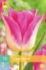 850240/8603 Tulipán růžovosmetanový TRIUMF - Dynasty 10ks