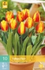850238/9101 Tulipán žlutooranžový raný -  Flair 10ks