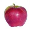 Jablka Gloster (krabice 8kg)