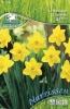 597266 / 9999 Narcisy žluté 26ks