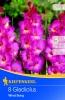 702851 Gladioly holandské Wind Song 8ks /8205