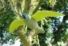 Maketa sokola - létající / CH9189