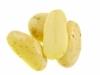 Konzumní brambory Santera (pytel 10kg)