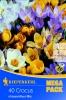 509153 Botanické krokusy směs 40ks