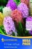 508767Hyacinty směs pastelových barev 9ks