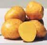 Rané brambory balení 10kg