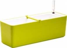 Truhlík Berberis 60 cm Zelená + Bílá