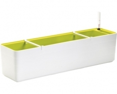 Truhlík Berberis 80 cm Bílá + Zelená