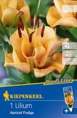 733879 Lilie Apricot Fudge 1ks /9101